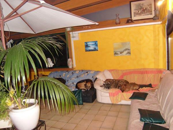 pas envie de mettre m dor au chenil pr f rez l h tel pour chiens dailynord dailynord. Black Bedroom Furniture Sets. Home Design Ideas