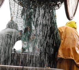 Mer patrie : vingt-quatre heures en mer avec les pêcheurs d'Etaples (1/3)