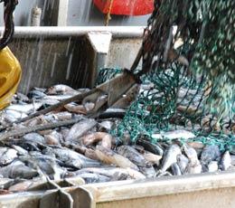 Mer patrie : vingt-quatre heures en mer avec les pêcheurs d'Etaples (2/3)