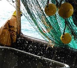 Mer patrie : vingt-quatre heures en mer avec les pêcheurs d'Etaples (3/3)