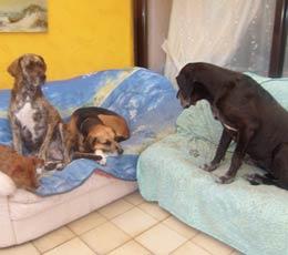 Pas envie de mettre Médor au chenil ? Préférez l'hôtel pour chiens !