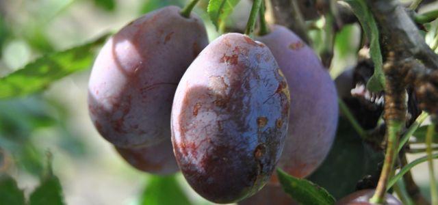 Enquête : dans la direction des entreprises nordistes, les femmes comptent pour des prunes