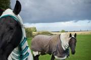 Politique : ceux qui ont misé sur le bon cheval (ou le mauvais)