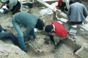 Pourquoi la découverte des crânes de Biache a marqué l'archéologie