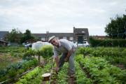Quatre saisons en immersion dans les jardins ouvriers d'Hazebrouck