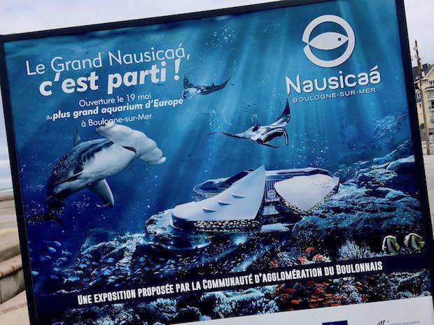 Pour Nausicaa, la facture des requins-marteaux morts est salée