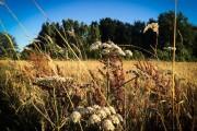 Subventions du conseil régional des Hauts-de-France : l'environnement et l'écologie vont continuer de trinquer !