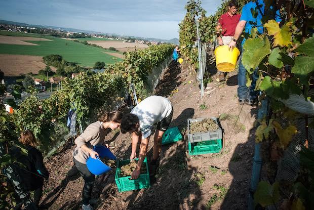 Cinq productions agricoles étonnantes dans les Hauts-de-France
